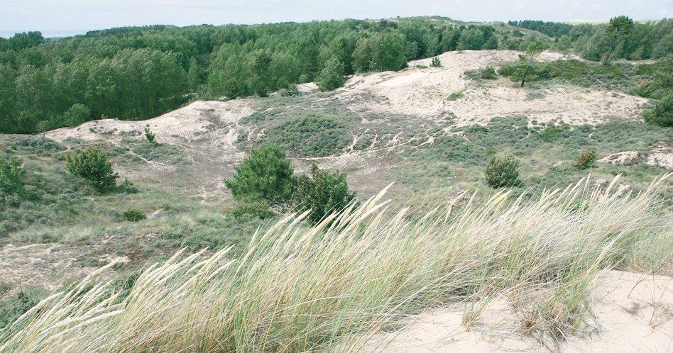 EDEN 62 - Milieux dunaires, Baie de Canche